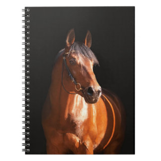 sportive horse at black notebook