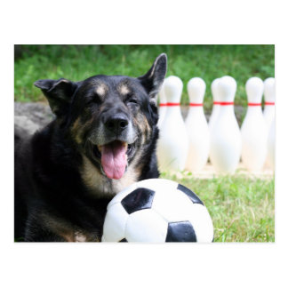Sportsdog Postcard