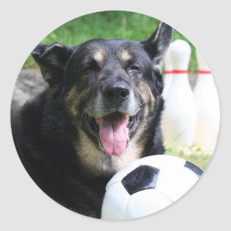 Sportsdog Sticker