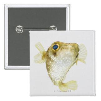 Spot-fin porcupinefish (Diodon hystrix) Button