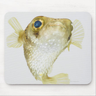 Spot-fin porcupinefish (Diodon hystrix) Mouse Pad