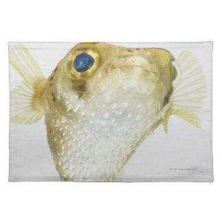 Spot-fin porcupinefish (Diodon hystrix) Place Mat