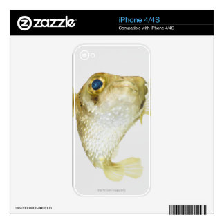Spot-fin porcupinefish (Diodon hystrix) Skins For The iPhone 4