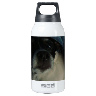 spot insulated water bottle