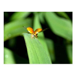 spot ladybird postcard