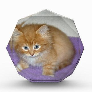 Spot on this kitten award