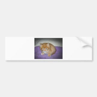 Spot on this kitten bumper sticker