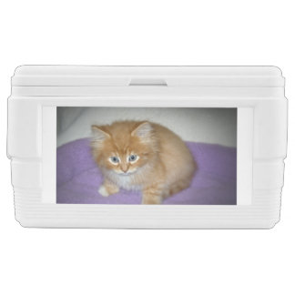 Spot on this Kitten Chest Cooler