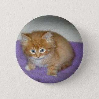 Spot on this kitten pinback button