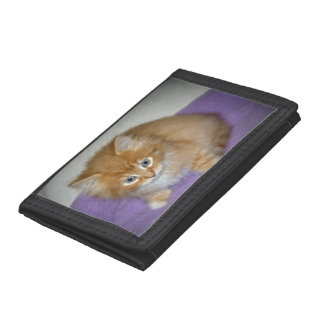 Spot on this Kitten Trifold Wallet