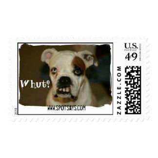 Spot Says Stamp