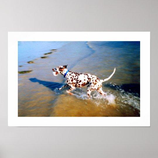 SPOT THE DALMATIAN DOG POSTER