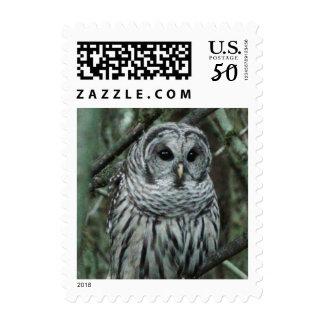 Spot, the owl postage