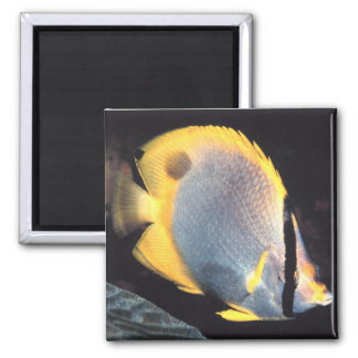 Spotfin Butterflyfish 2 Inch Square Magnet