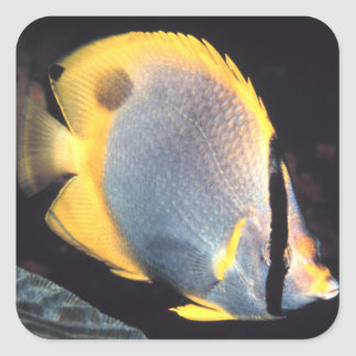 Spotfin Butterflyfish Square Sticker