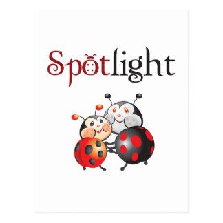 Spotlight Ladybug Postcard