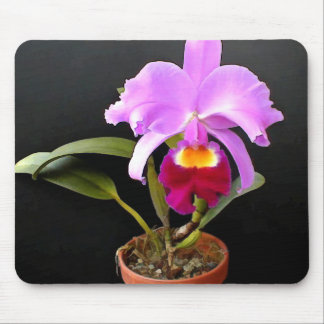 Spotlight on Potted Purple Orchid Mouse Pad