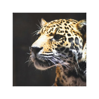 Spots and Shadow Canvas Print