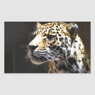 Spots and Shadow Rectangular Stickers
