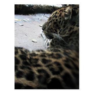 Spots Cat Postcard