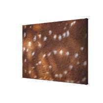 Spots on an animal canvas print