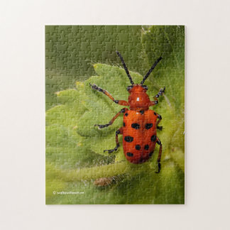 Spotted Aparagus Beetle Jigsaw Puzzle