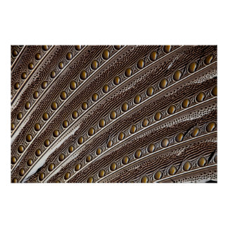 Spotted Argus pheasant feather Poster