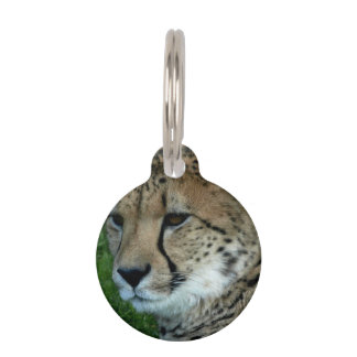Spotted Cheetah Pet Tags