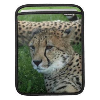 Spotted Cheetah iPad Sleeve