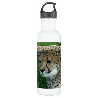 Spotted Cheetah 24oz Water Bottle