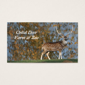 Spotted chital deer stag by a lake business card