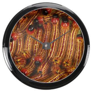 Spotted Datana Moth Caterpillars Aqua Clocks