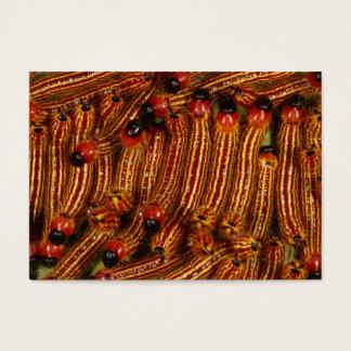 Spotted Datana Moth Caterpillars Business Card