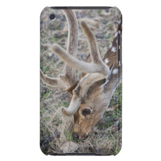 Spotted deer or chital in Indian tiger reserve Barely There iPod Cover