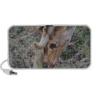 Spotted deer or chital in Indian tiger reserve Portable Speaker