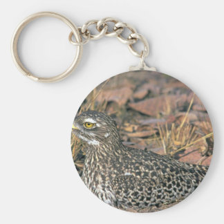 Spotted Dikkop Keychains