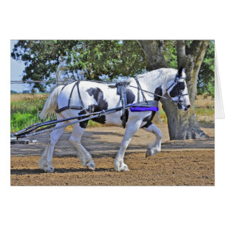 Spotted Draft Horse Card