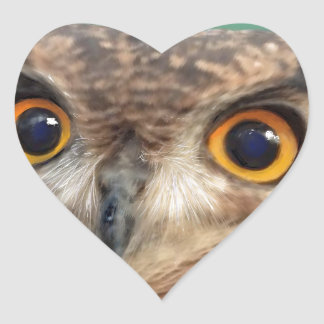 Spotted eagle-owl heart sticker