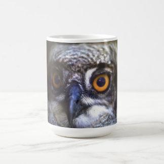 spotted eagle owl knp coffee mug