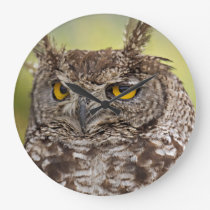 Spotted Eagle Owl Large Clock