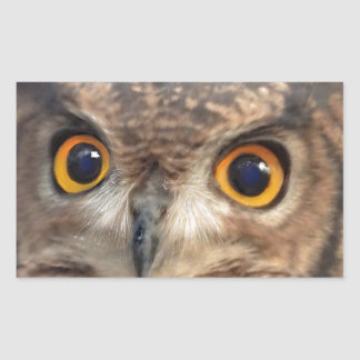 Spotted eagle-owl rectangular sticker