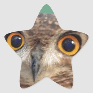 Spotted eagle-owl star sticker