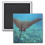 Spotted Eagle Ray 2 Inch Square Magnet