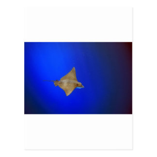 Spotted eagle ray swimming underwater paradise postcard