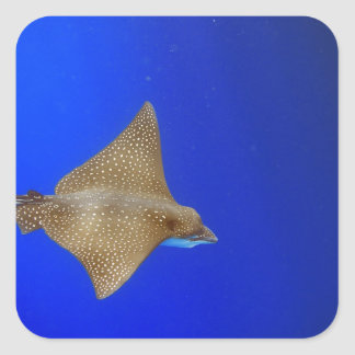 Spotted eagle ray swimming underwater paradise square sticker