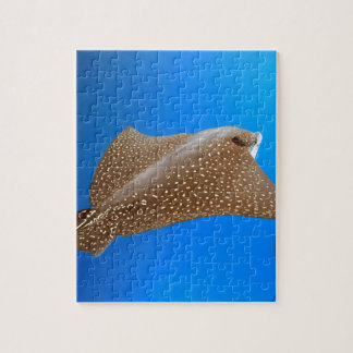 Spotted eagle ray underwater Galapagos paradise Jigsaw Puzzle