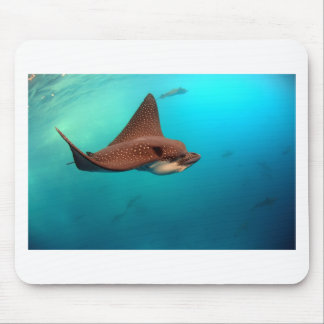 Spotted eagle rays Galapagos Islands Mouse Pad