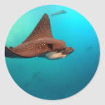 Spotted eagle rays Galapagos Islands Round Stickers