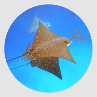 Spotted eagle rays underwater Galapagos Round Stickers