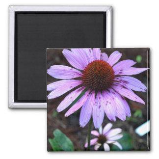 Spotted Echinacea Flower Fridge Magnet